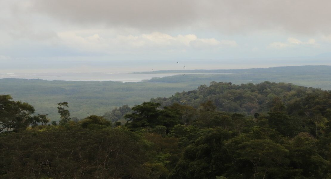 Over 745 Acres of Prime Forest Land with Stunning Ocean and River Views Overlooking the Sierpe River